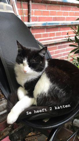 De kat van Marijke